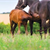 Start your foal right for future health