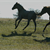 Moving horses to young pastures by Dr. Jim White