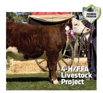 Youth-4H-Calf-Photo